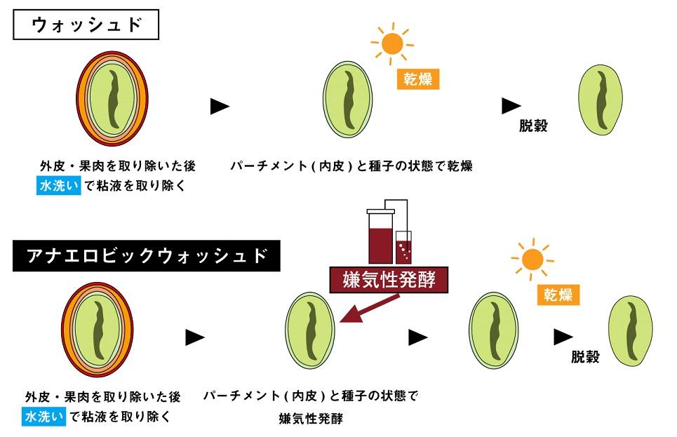 アナエロビックウォッシュドの精製方法