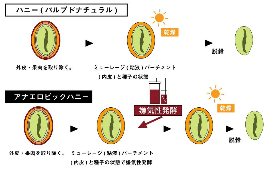 アナエロビックハニーの精製方法