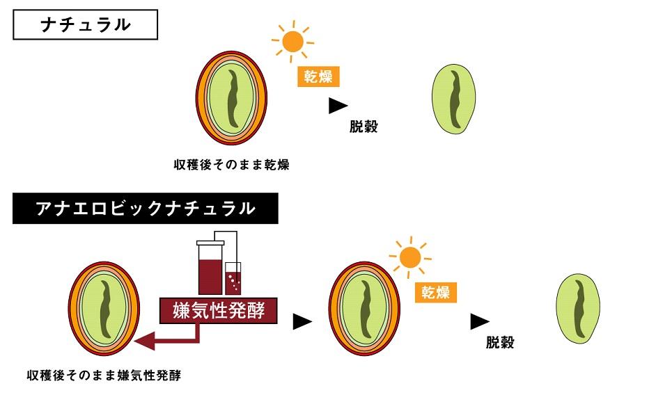 アナエロビックナチュラルの精製方法