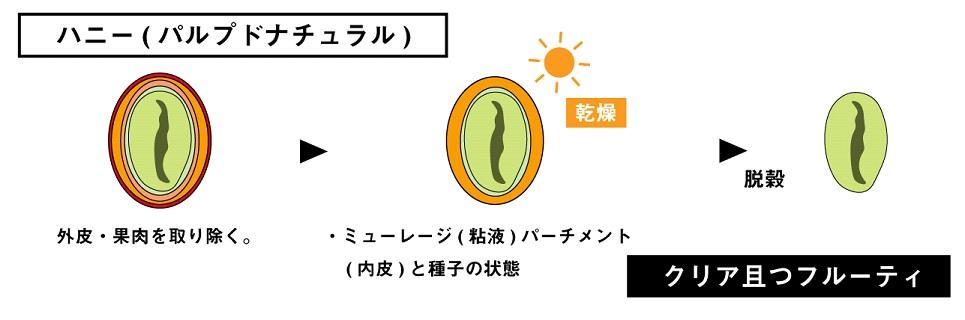 ハニー(パルプトナチュラル)の精製方法の特徴